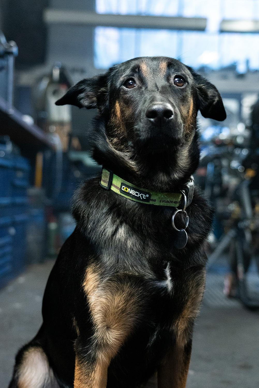 Triumph City Hund, Überwachung